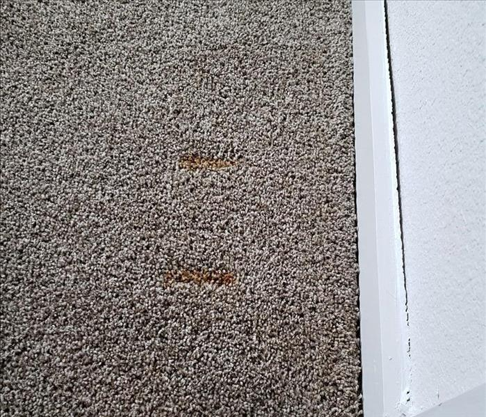 Rust Stains on Carpet Before