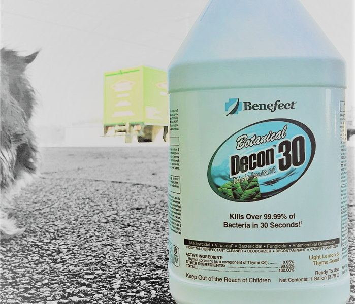 A white jug of Benefect next to a wire haired small dog